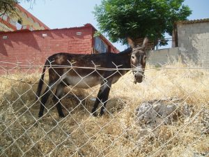 donkey-in-greece